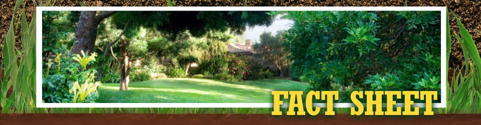 Fact Sheet - well-maintained lawn
